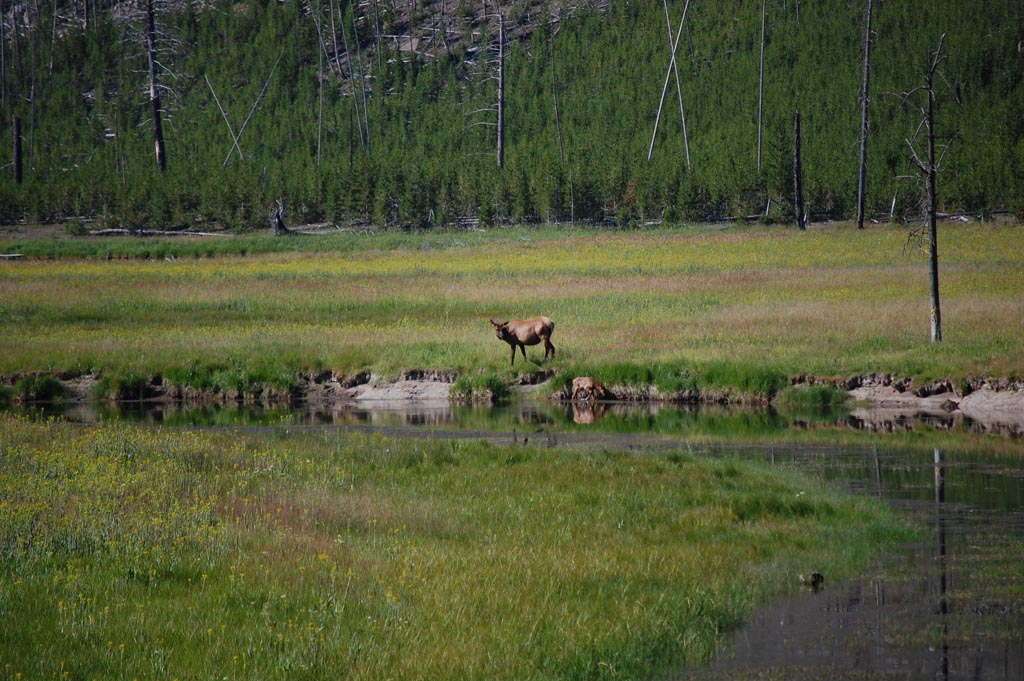 typical shot along a riverway in Yellowstone